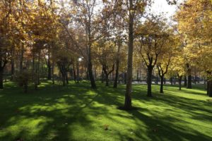 Mellat park Tehran in Fall