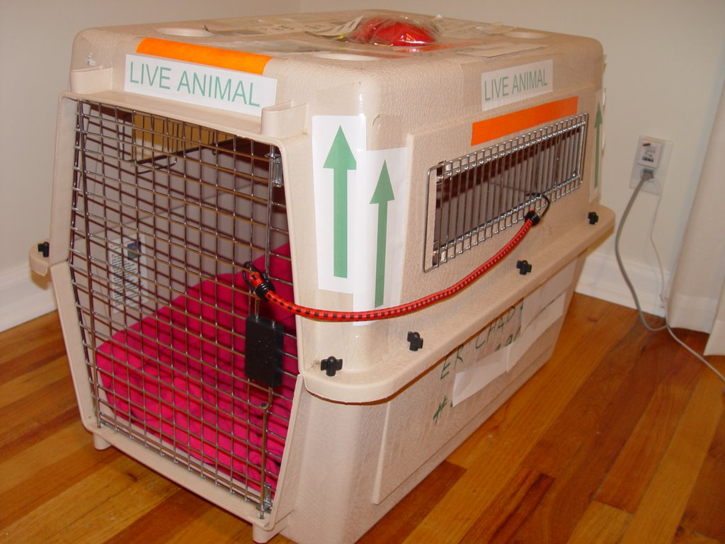 Animals cage for traveling by plane