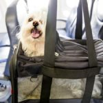 Traveling to Iran with Pets; Don't Leave your Best Friends