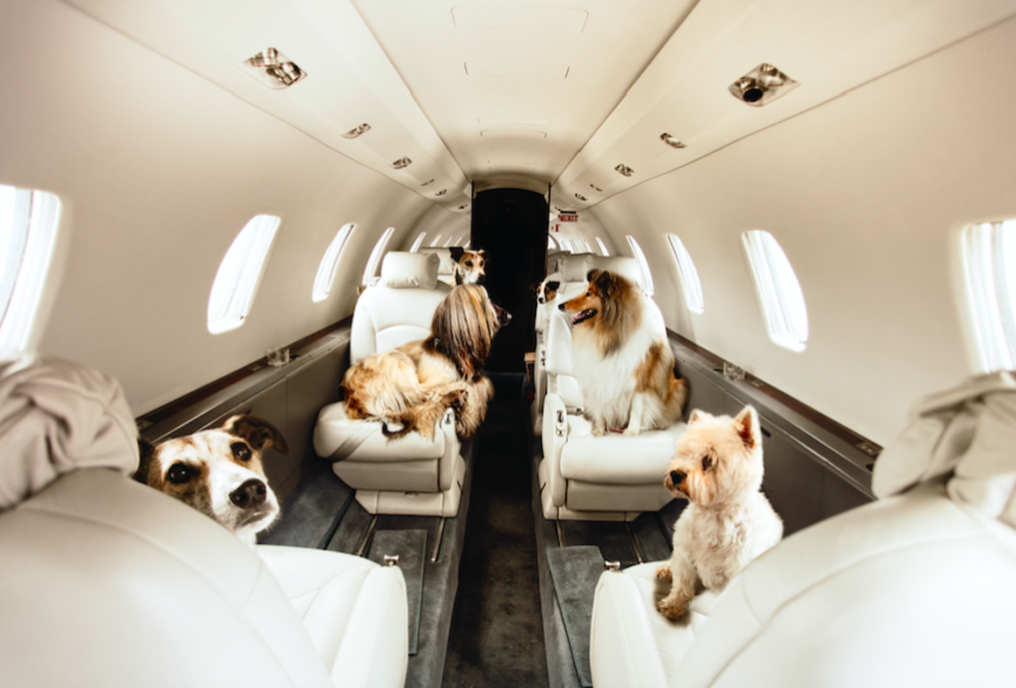 Dogs on the Plane