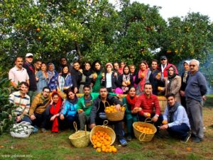 Fruit picking with locals at the Gileboom Homestay Ecolodge in Gilan