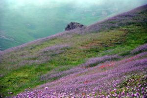Wildflowers along the Asalem
