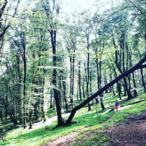 Gilan's forest