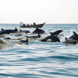 Play with the Dolphins of Hengam Island